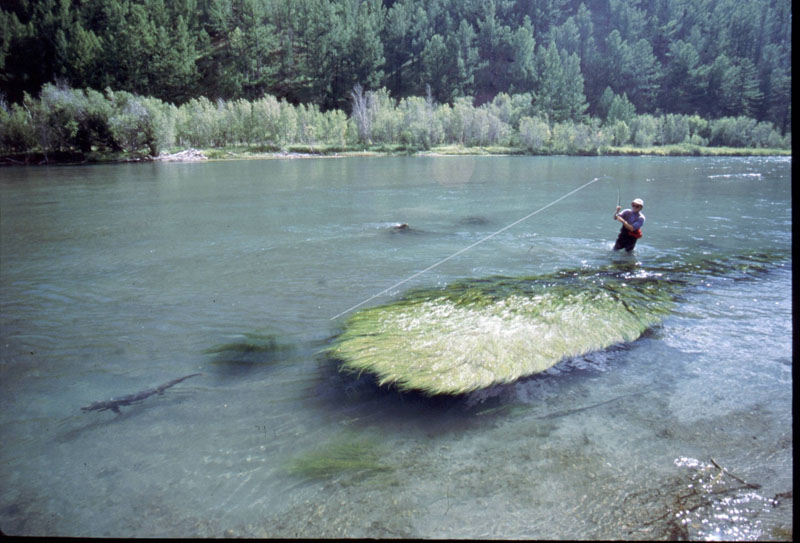 Mongolia fly fishing lodges and trips for Taimen fishing mongolia